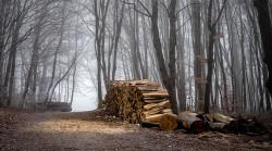 Holzstapel im Wald