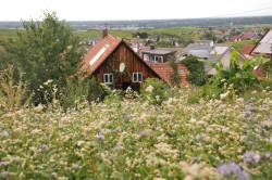 Blumenwiese in Eisental