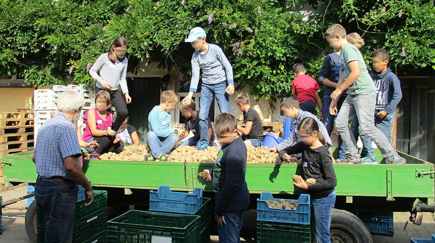 """Kinder auf einem Anhänger mit Kartoffeln beim Umweltdiplom """"Vom Hof frisch auf den Tisch"""""""