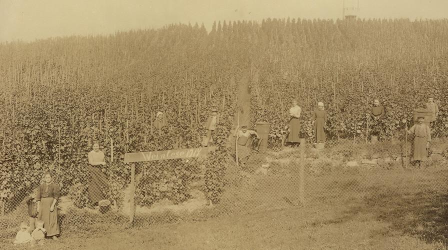 Kappelwindeck, Weinlese 1917